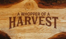 A Whopper Of A Harvest (Part 1)